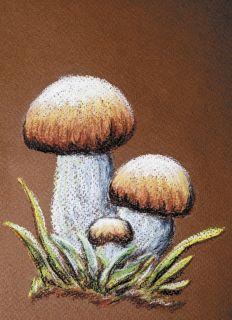 Почтовая открытка Белые грибы