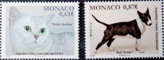 Почтовая открытка Monaco - British Shorthair, Bull Terrier