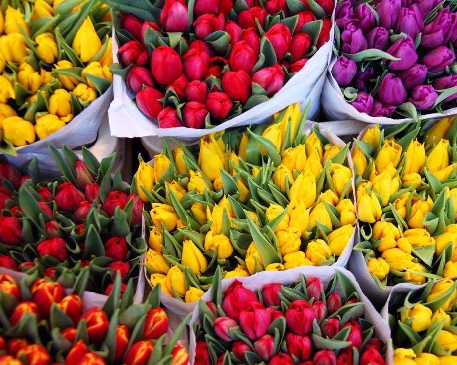 Тюльпаны разноцветные Микс