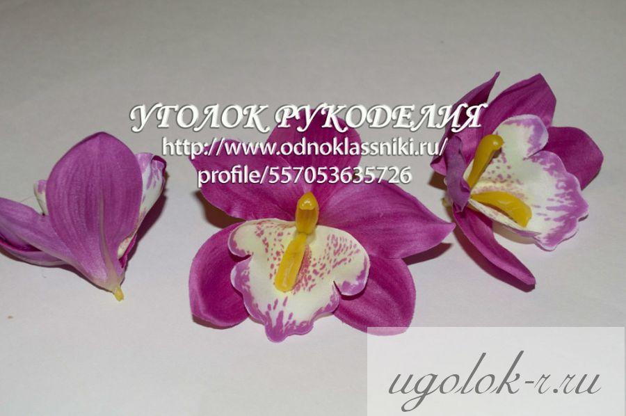Орхидея большая
