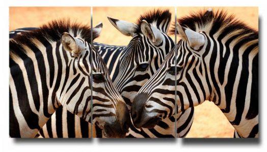 Модульная картина 3 зебры