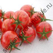 "Томат ""РОЗОВЫЙ ШМЕЛЬ"" (Pink Bumble Bee) 10 семян"