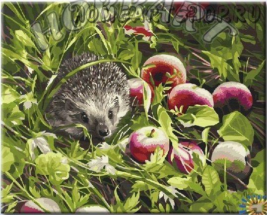 Злак райграс многолетний фото и описание видов травы