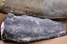 Зубатка  синяя Мурманск от 15 кг