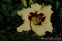 Лилейник 'Мунлайт Маскараде' /  Hemerocallis 'Moonlight Masquerade'