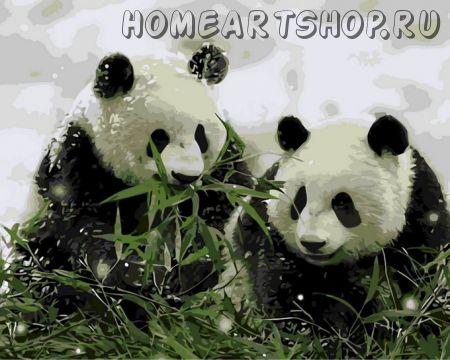 "Раскраска по номерам ""Две панды"""