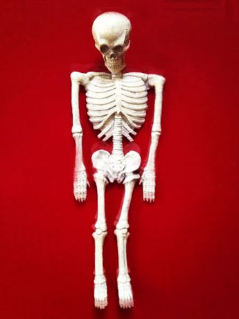 Скелет резиновый