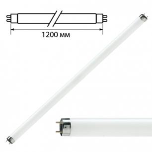 Лампа люминесцентная PHILIPS TL-D 36W/33-640, 36Вт, цокольG13, в виде трубки 120см, холод. бел.свет