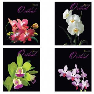 Тетрадь 48л. BRAUBERG кл., обл. мел. карт., Орхидеи (4 вида), 401287