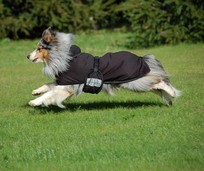 Back on Track для собак