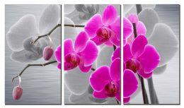 Орхидея на сером фоне