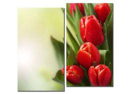 Тюльпаны после дождя
