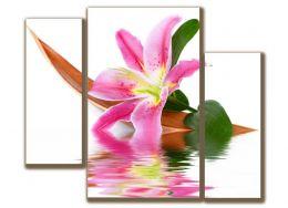 Лилии цветок