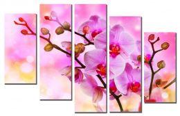 Сказочные орхидеи