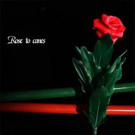 Rose to Canes Роза превращается в трости