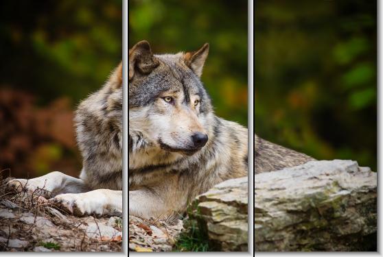 Модульная картина Волк