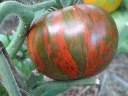Томат Полосатый Шоколад (З.Г)