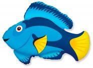 """Голубая рыбка, 34""""/ 77 см* 86 см"""
