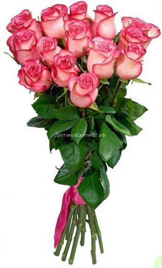 Элитные высокие (80-90 см) розовые голландские розы