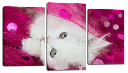 Модульная картина Белый котенок