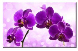 Орхидея сиреневого цвета