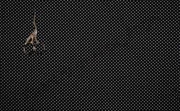 Капли дождя на черном интерлок