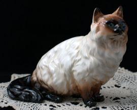 Гималайский кот. Shafford, Япония