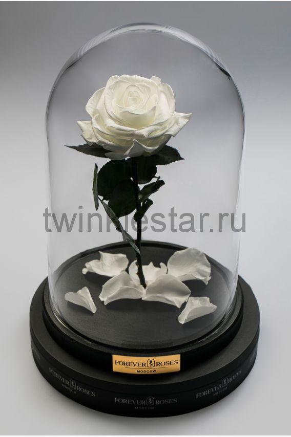 Роза в колбе (белый) на прямом стебле, 33 см