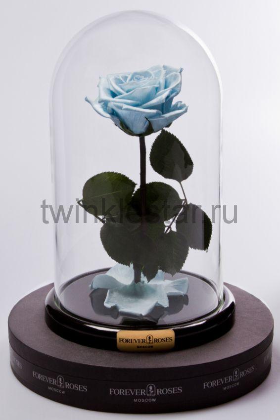 Роза в колбе (голубая) на прямом стебле, 27 см