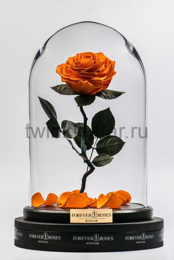 Роза в колбе (оранжевая) на изогнутом стебле, 33 см