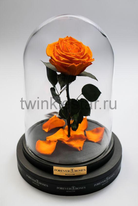 Роза в колбе (оранжевая) на прямом стебле, 33 см
