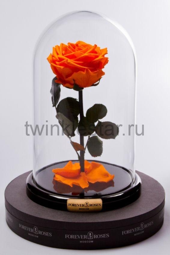 Роза в колбе (оранжевая) на прямом стебле, 27 см