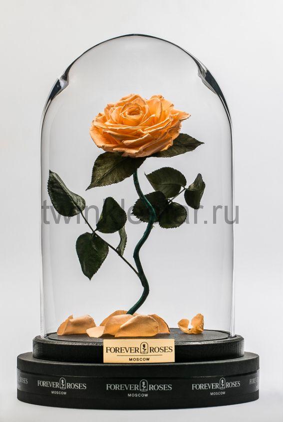 Роза в колбе (персиковый) на изогнутом стебле, 33 см