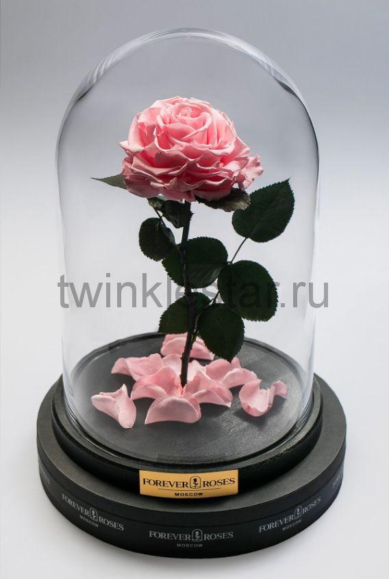 Роза в колбе (светло розовая) на прямом стебле, 33 см