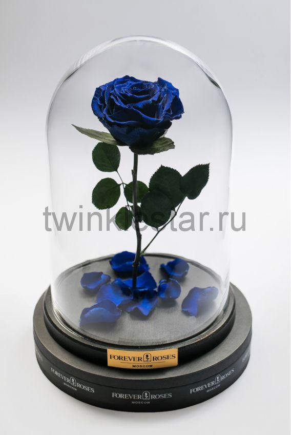 Роза в колбе (синяя) на прямом стебле, 33 см
