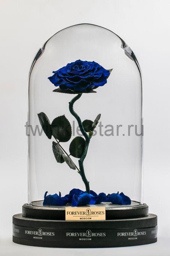 Роза в колбе (синяя) на изогнутом стебле, 33 см