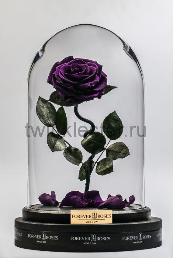Роза в колбе (фиолетовая) на изогнутом стебле, 33 см