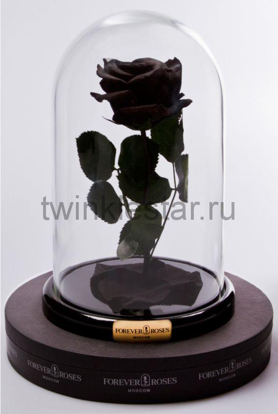 Роза в колбе (черная) на прямом стебле, 27 см