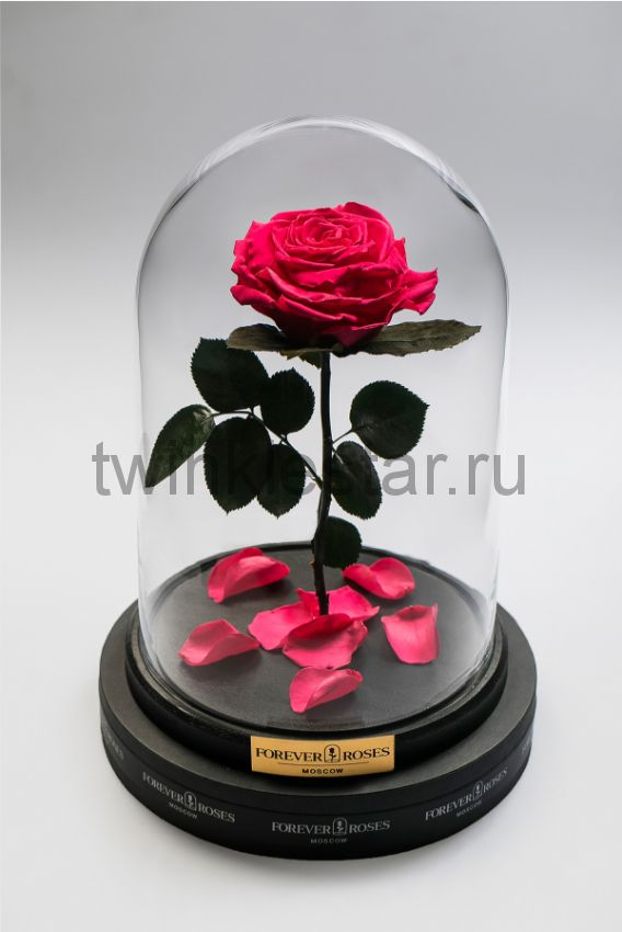 Роза в колбе (ярко розовая) на прямом стебле, 33 см