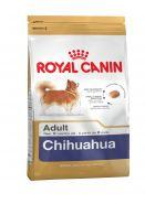 Чихуахуа эдалт 1.5 кг