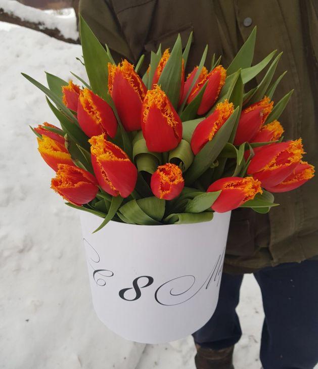 25 тюльпан в коробочке
