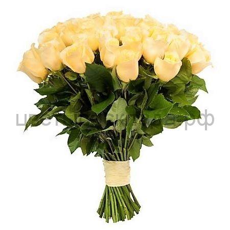 Роза Эквадор Кремовая