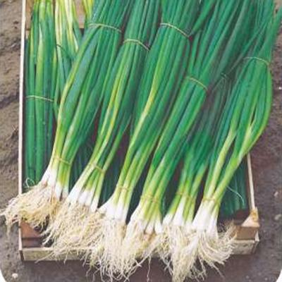 """Купить семена лука """"Парадэ"""" (100 семян) от Bejo"""