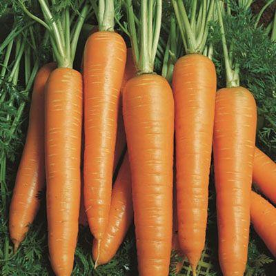 "Купить семена моркови ""Вита Лонга"" от Bejo"