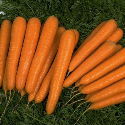купить семена моркови лагуна f1