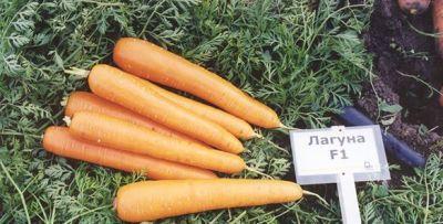 """Купить морковь """"Лагуна"""" F1 (1/10 г) от Nunhems"""