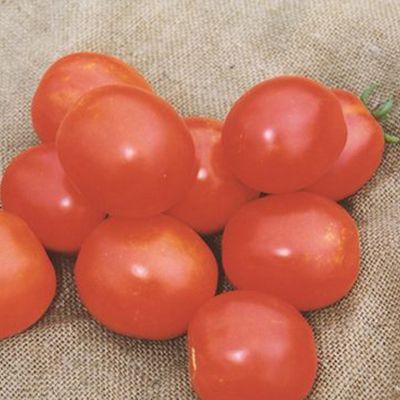 """Купить семена томата """"Солероссо"""" F1 (20/100 семян) от Nunhems"""