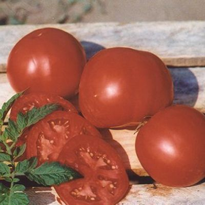 "Купить томат ""Отранто"" F1 (10/100 семян) от Nunhems"