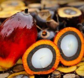 Масло пальмовое рафинированное (500 г) Малайзия
