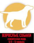 Взрослые собаки